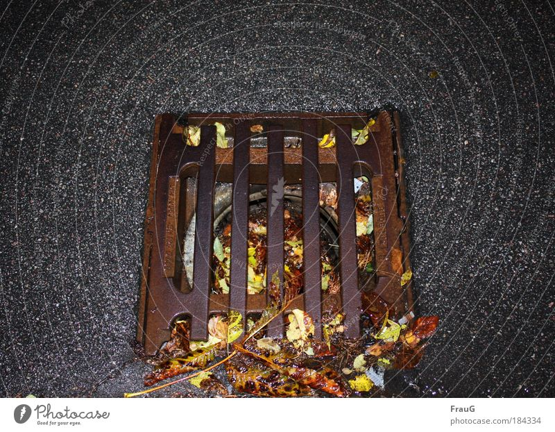 bunt verstopft Außenaufnahme Menschenleer Nacht Blick nach unten Gulli Herbst Straße Beton Metall alt Umwelt