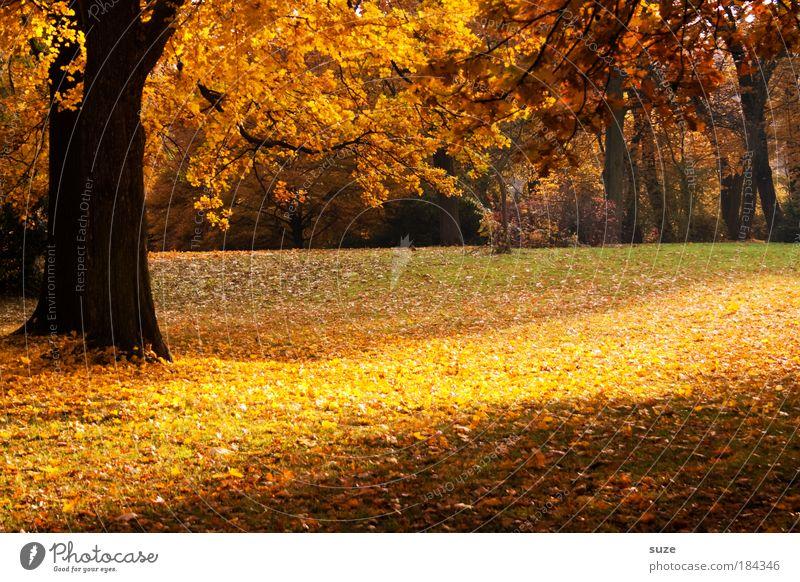 Parkstreifen Natur schön Baum Landschaft ruhig Blatt gelb Umwelt Gefühle Herbst Zeit gold ästhetisch fantastisch Jahreszeiten