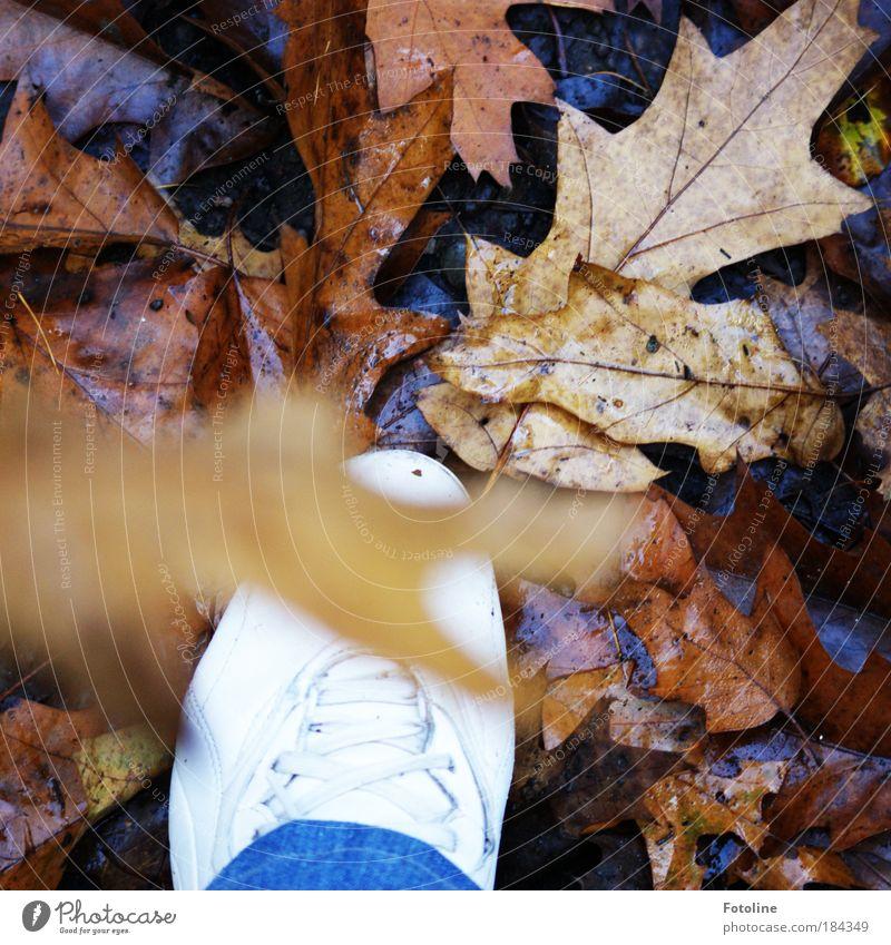 Waldspaziergang Farbfoto mehrfarbig Außenaufnahme Tag Licht Sonnenlicht Unschärfe Mensch Fuß Umwelt Natur Pflanze Erde Herbst Wetter Baum Blatt Wildpflanze
