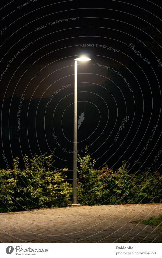 Alone in the dark Farbfoto Außenaufnahme Menschenleer Nacht Kunstlicht Licht Schatten Silhouette Langzeitbelichtung Zentralperspektive Pflanze Sträucher Europa