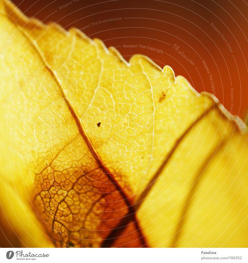 Vergängleichkeit Farbfoto mehrfarbig Außenaufnahme Menschenleer Textfreiraum rechts Textfreiraum oben Morgen Tag Sonnenlicht Umwelt Natur Pflanze Herbst Wetter