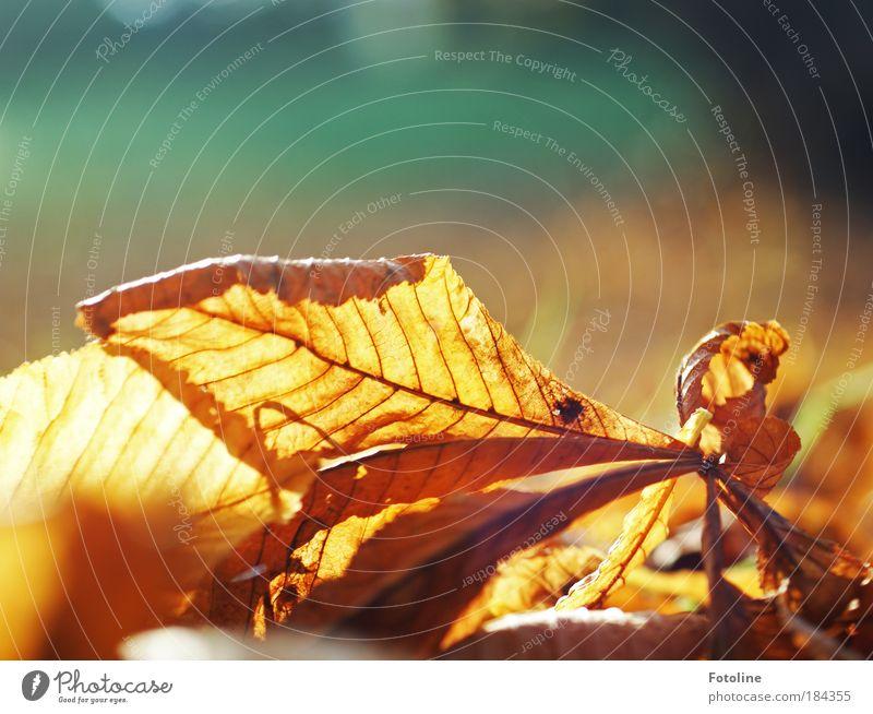 Herbstlaub Natur Baum Pflanze Sonne Blatt Umwelt gelb Wärme hell Park braun Erde Wetter gold Klima ästhetisch