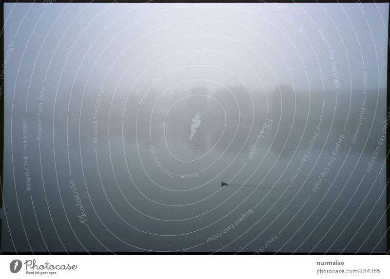 Optima'ler Nebel Nr 2 Gedeckte Farben Menschenleer Morgen Silhouette Lichterscheinung High Key Angeln Ferne Insel Winter Joggen Kunst Gemälde Umwelt Natur