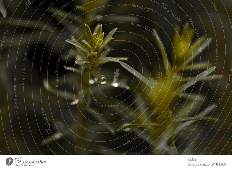Balance Natur grün Pflanze Blatt dunkel Landschaft Gesundheit Nebel Umwelt nass Wachstum natürlich schlechtes Wetter Nutzpflanze Wildpflanze Lein