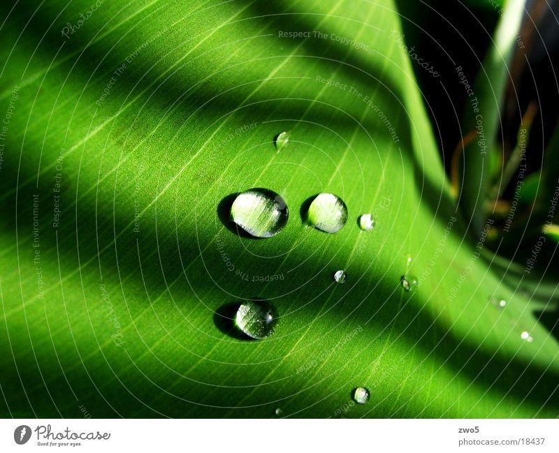 banane Wasser grün Regen Wassertropfen Banane
