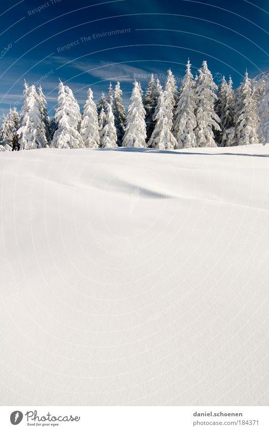 blau weiß hochkant Winter Ferien & Urlaub & Reisen Schnee Baum Eis Frost Tourismus Tanne Schönes Wetter Schwarzwald Winterurlaub Pulverschnee