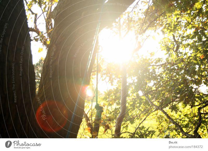 zett und bitti gewidmet Umwelt Natur Landschaft Luft Sonne Sonnenlicht Herbst Schönes Wetter Baum Garten Wald Blühend entdecken Erholung festhalten Klettern
