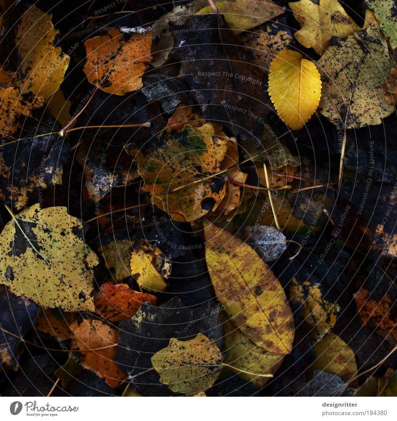 Schlafen legen Natur alt Baum Pflanze Blatt Umwelt dunkel Tod kalt Herbst Park Regen Wetter Klima Hoffnung Vergänglichkeit