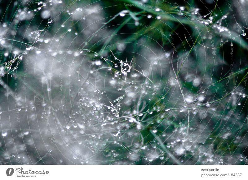 Tropfen Wasser Pflanze Herbst Regen Hintergrundbild Wetter Wassertropfen nass Ordnung Sträucher feucht Tau Hecke Ranke Nieselregen Sichtschutz