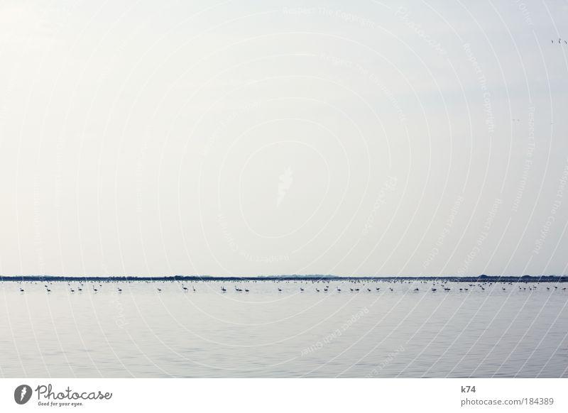 Flamencos Wasser Himmel Meer blau ruhig Ferne See Landschaft Vogel Küste Horizont Fluss stehen Seeufer Teich Fressen