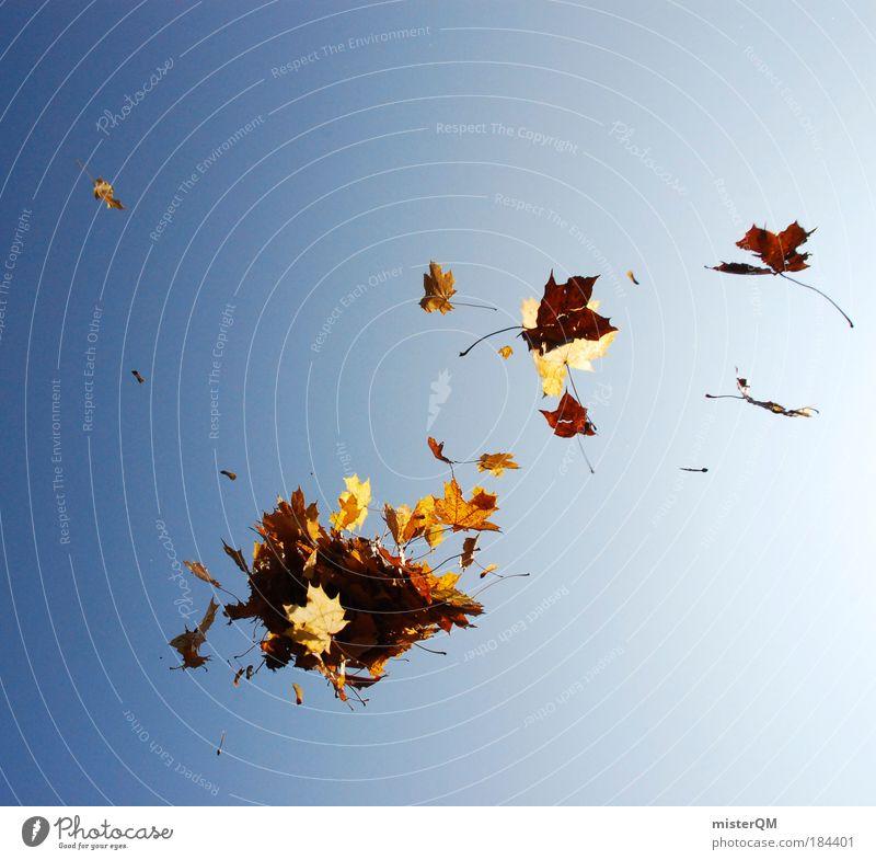 Herbstausflug. Natur Freude Blatt Wind Leben Wetter braun fliegen ästhetisch außergewöhnlich Spaziergang viele Ende Kreativität Weltall