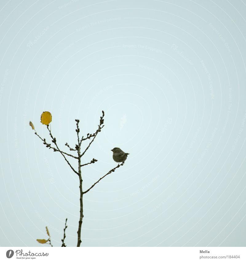 Spatzenherbst Natur Himmel Baum Pflanze Winter ruhig Blatt Einsamkeit Tier Herbst grau Luft Stimmung Vogel klein Umwelt