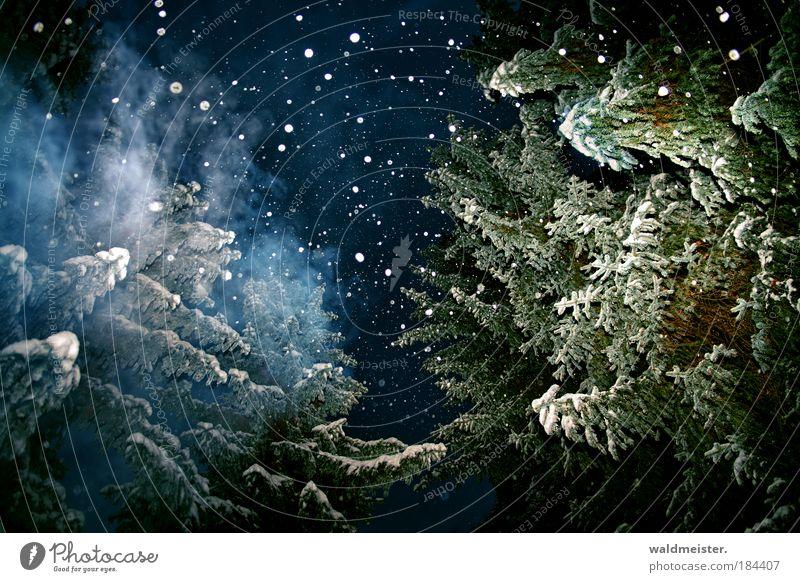 Marleys Geist Nachthimmel Winter Schnee Schneefall Baum Wald Erholung außergewöhnlich gruselig blau grün weiß Gefühle Vorfreude ruhig Weltall