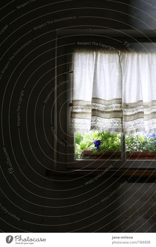 Into the light alt Blume Haus dunkel Wand Fenster Garten träumen Mauer authentisch Dorf geheimnisvoll verstecken Vorhang Garage