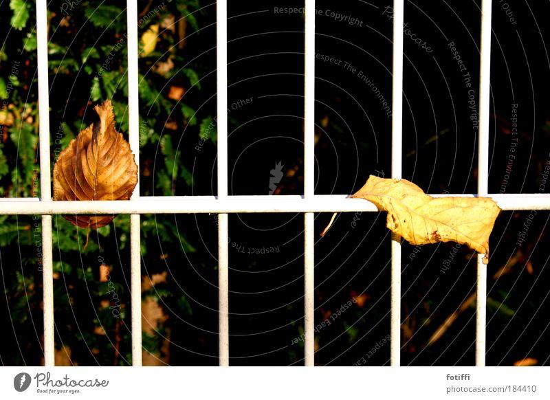Zaungäste Natur ruhig Blatt Erholung Herbst Garten Zusammensein beobachten Neugier trocken Gitter Feierabend faulenzen