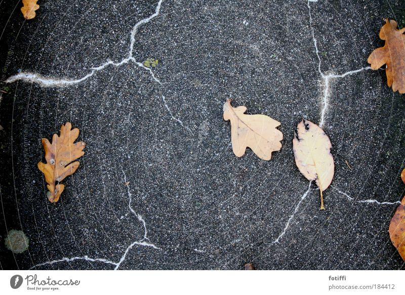 Blätter bei Gewitter Natur Blatt Herbst orange Beton bedrohlich wild Blitze Unwetter chaotisch Eile toben
