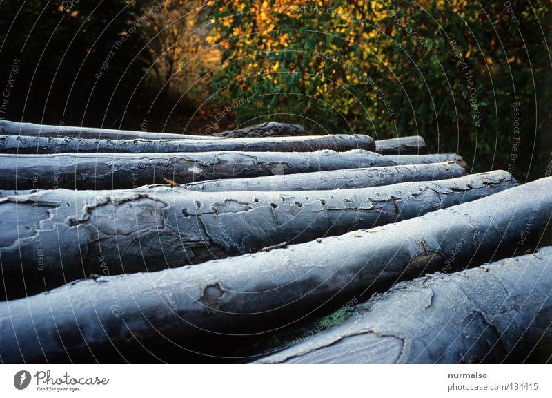 Kaminholz im Frost Natur Baum Erholung ruhig kalt Umwelt Herbst glänzend Eis Zeichen Feuer Baumstamm entdecken Rauch Dienstleistungsgewerbe