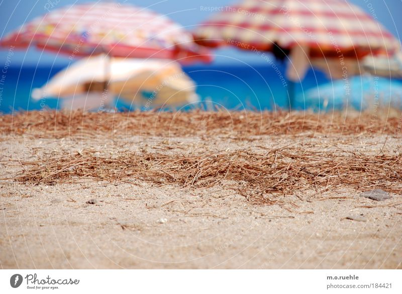 pinien nadeln Wasser Meer blau Sommer Strand Ferien & Urlaub & Reisen ruhig Ferne Sand Wärme Luft Insel Tourismus Gelassenheit Kunststoff Sonnenschirm