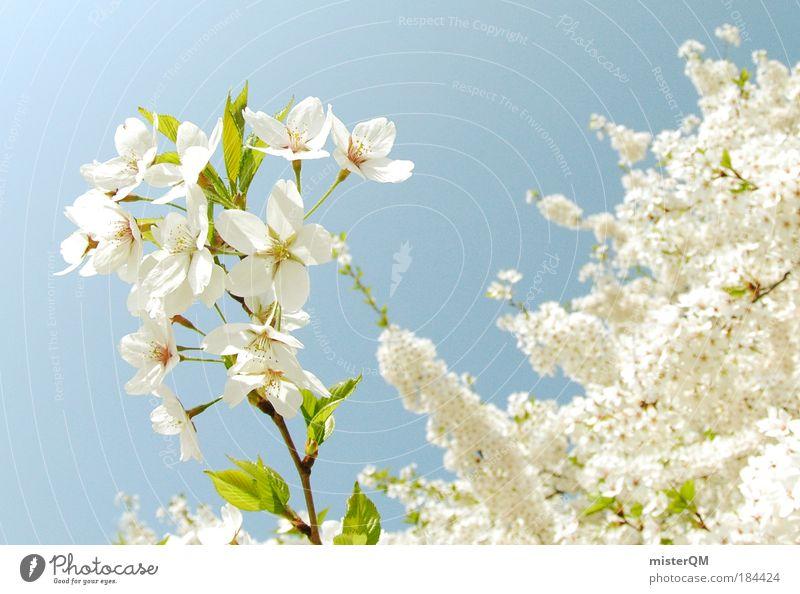 Prime of Life. Natur schön weiß Frucht Leben Blüte Frühling Freiheit träumen Park Landschaft Makroaufnahme Erde Kraft Gesundheit Wetter