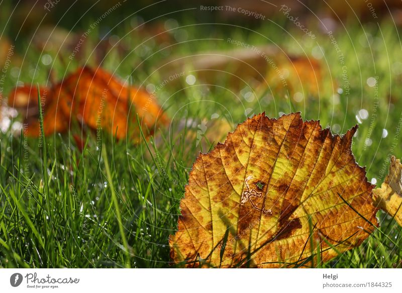 herbstlich... Natur Pflanze grün weiß Blatt ruhig Umwelt gelb Leben Herbst natürlich Gras klein Garten braun Stimmung