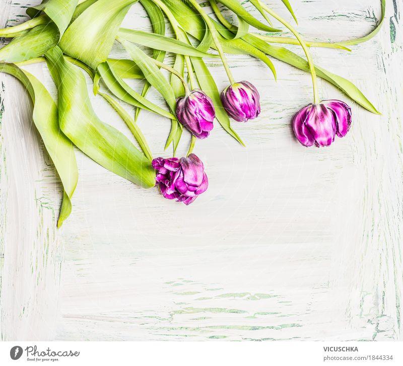 Hübsche Tulpen auf weißem Hintergrund Natur Pflanze schön Blume Liebe Frühling Hintergrundbild Stil Garten Design rosa Häusliches Leben Dekoration & Verzierung