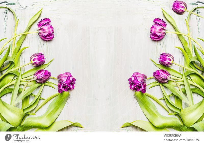 Hintergrund mit Lila Tulpen Stil Design Freude Dekoration & Verzierung Natur Pflanze Frühling Blume Blatt Blüte Blumenstrauß Blühend Liebe gelb violett rosa