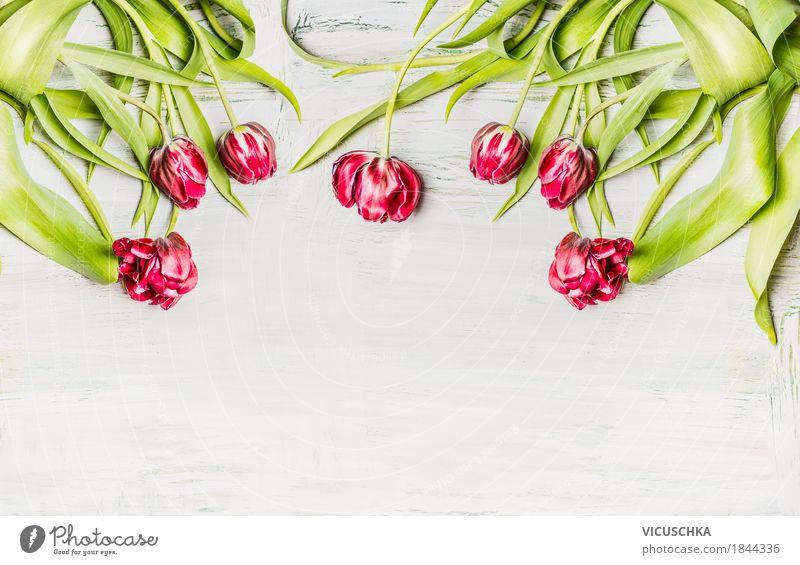 Tulpen auf weißem Holz Hintergrund Natur Pflanze schön rot Blatt Blüte Liebe Frühling Hintergrundbild Stil Feste & Feiern Stimmung Design rosa