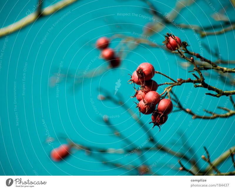 Vogelperspektive Farbfoto Textfreiraum links Textfreiraum unten Tag Ernährung Natur Himmel Wolkenloser Himmel Herbst Winter Baum Sträucher Blüte exotisch blau
