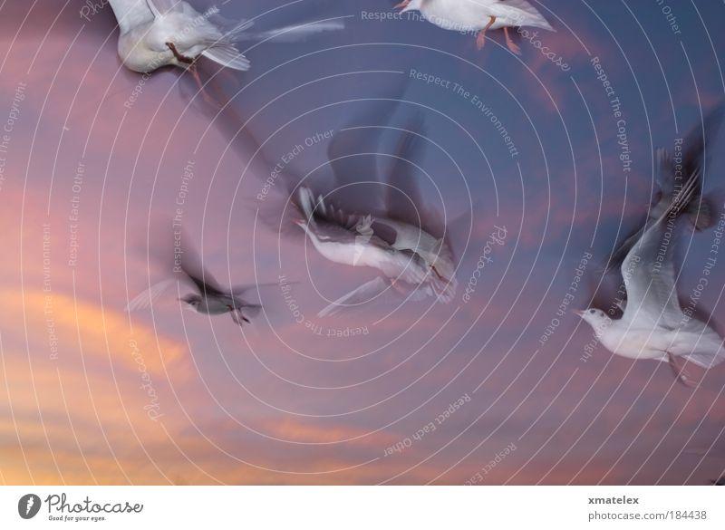 flugsus Himmel Möven Tiergruppe fliegen mehrfarbig Leben Leichtigkeit Surrealismus Vogel Farbfoto Außenaufnahme Dämmerung Bewegungsunschärfe
