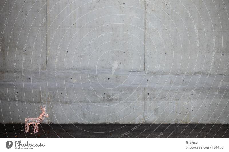 Kühle Weihnachten Weihnachten & Advent Tier Wand Architektur grau Mauer Feste & Feiern abstrakt Beton stehen Industrie
