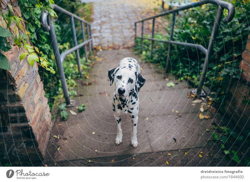 Ja und nun? Stadt Tier Haustier Hund beobachten Blick stehen warten Freundlichkeit schön natürlich niedlich Vertrauen loyal Sympathie Freundschaft Liebe