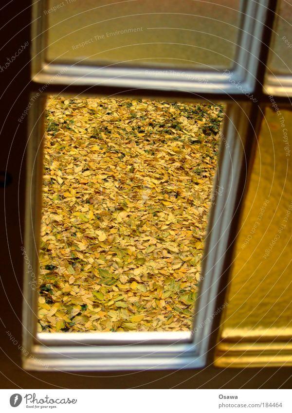 Fenster zum Herbst Blatt gelb Boden Jahreszeiten durchsichtig Fensterscheibe Hof Oktober Hochformat