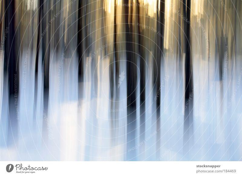 Winterwald abstrakt Hintergrundbild Strukturen & Formen Kiefer Kiefern Europa Finnland Arktis Schnee Wald Landschaft Natur im Freien Baum Unschärfe Finnisch