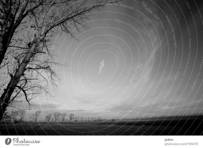 reise durch brandenburg Baum ruhig dunkel träumen Landschaft Feld Angst Armut Tourismus Romantik Unendlichkeit gruselig entdecken Schwarzweißfoto Surrealismus mystisch