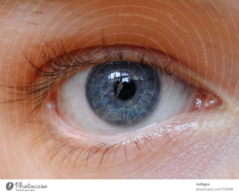 ojo abierto Erscheinung