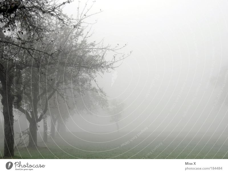 Frühnebel II Natur Himmel Baum Straße Wald kalt Herbst Wege & Pfade Park Regen Landschaft Luft Angst Nebel Wetter Wassertropfen