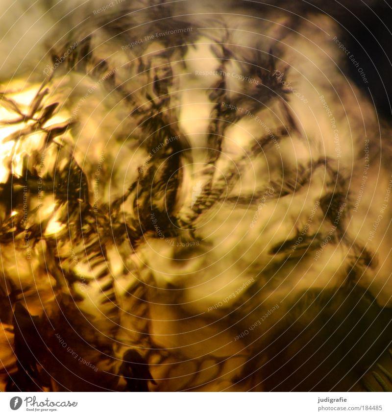 Farn Farbfoto Außenaufnahme Tag Unschärfe Umwelt Natur Pflanze Herbst Wiese dehydrieren Wachstum dunkel einzigartig natürlich Wärme wild gelb gold Farbe