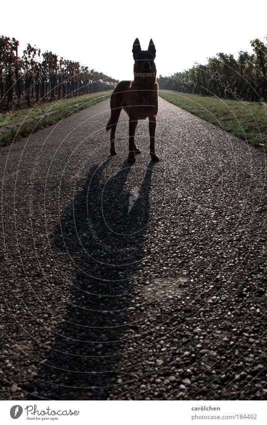 Symmetrie mit Hund Farbfoto Gedeckte Farben Außenaufnahme Gegenlicht Ganzkörperaufnahme Blick in die Kamera Blick nach vorn Natur Tier Haustier 1 stehen warten