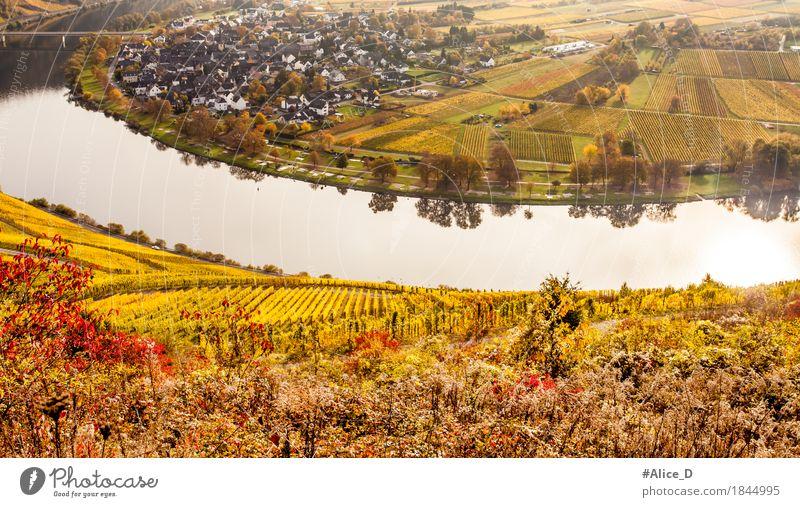 Herbstbunte Mosellandschaft und Winzerdorf Wolf Umwelt Natur Landschaft Urelemente Wasser Nutzpflanze Wein Weinberg Feld Flussufer Mosel (Weinbaugebiet)