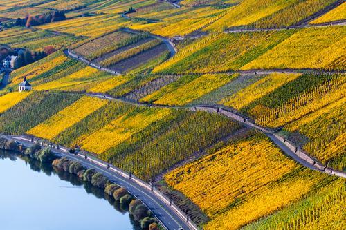 Herbst Mosel Weinreben Landschaft Natur Ferien & Urlaub & Reisen Pflanze Farbe grün schön Erholung gelb natürlich Deutschland Stimmung Tourismus