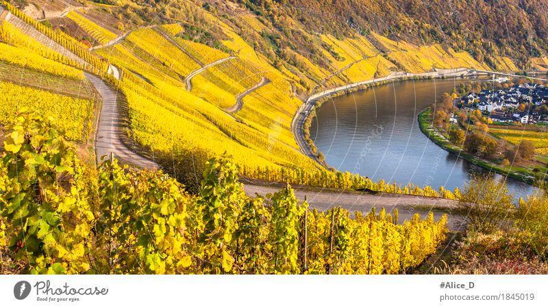 Goldener Mosel Weinlandschaft Natur Ferien & Urlaub & Reisen schön Wasser Landschaft Erholung Haus Umwelt gelb Herbst natürlich Stimmung Freizeit & Hobby