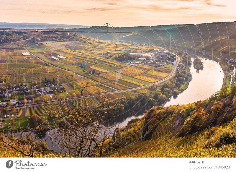 Herbst Mosellandschaft Umwelt Natur Landschaft Wasser Horizont Sonnenaufgang Sonnenuntergang Weinberg Wiese Feld Hügel Flussufer Herbstlandschaft Ürzig