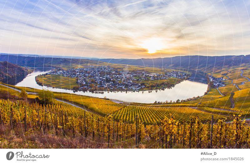 Herbst Mosel und Goldener Weinlandschaft Himmel Natur Ferien & Urlaub & Reisen Wasser Landschaft Haus Deutschland Tourismus Horizont Ausflug wandern Europa