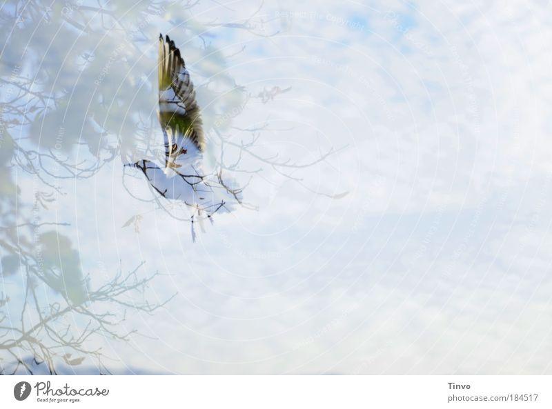 vogelfrei Himmel Baum Tier Herbst Freiheit träumen Vogel fliegen elegant Feder Flügel Möwe durchsichtig Schweben Doppelbelichtung