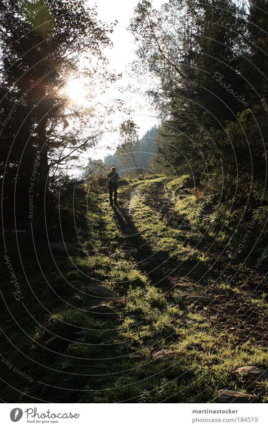 Der Sonne entgegen Natur weiß Baum Pflanze schwarz ruhig Erwachsene Wald Umwelt Landschaft Herbst Gras Wege & Pfade Luft Erde Wachstum
