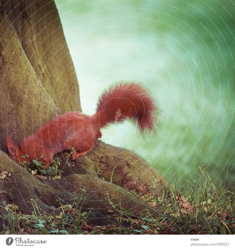 Suchbild Natur grün Baum rot Tier Umwelt Wiese Gras lustig klein Wildtier authentisch Schönes Wetter Ernährung niedlich Suche