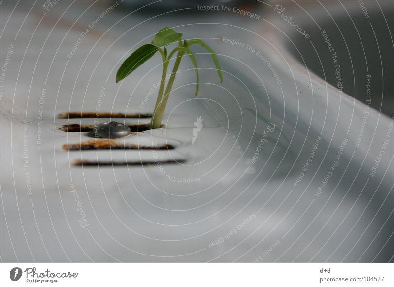 Y weiß grün Pflanze dreckig Erfolg verrückt Wachstum Reinigen natürlich außergewöhnlich schäbig Abfluss Willensstärke Grünpflanze Küchenspüle Keim