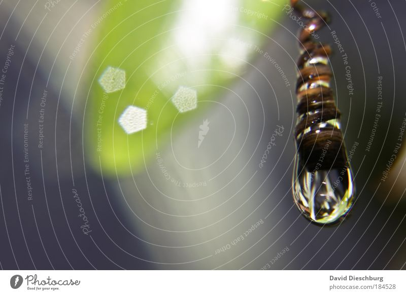 Glühbirnenalternative Natur Wasser grün Pflanze Blatt Umwelt Wiese Frühling Klima nass Makroaufnahme Wassertropfen einzeln Tropfen Licht Schatten