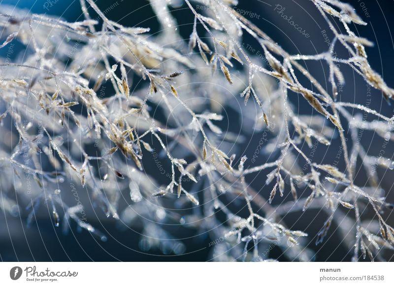 Vor dem Frost Natur blau Pflanze ruhig kalt Gras Schnee hell glänzend Park Eis Design leuchten Sträucher Wassertropfen Frost