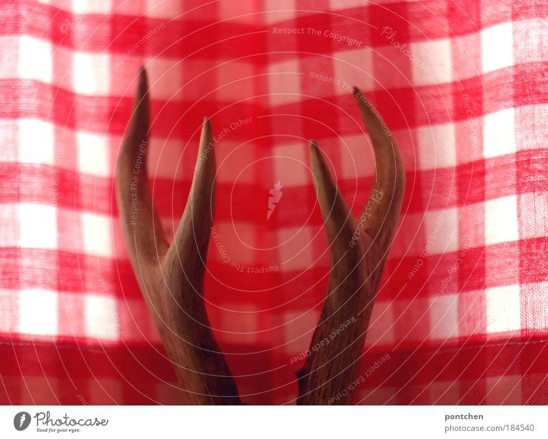 Ein Hirschgeweih vor rot-weiß karierten Vorhängen. Bayerisch spießig, traditionell. Jäger, Tierschutz, sterben, schießen. Trophäe. Jagd Häusliches Leben
